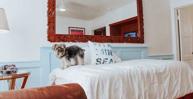Pet Friendly Hotel at Santa Monica